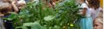 Groep 1 en 2 druk in de tuin.
